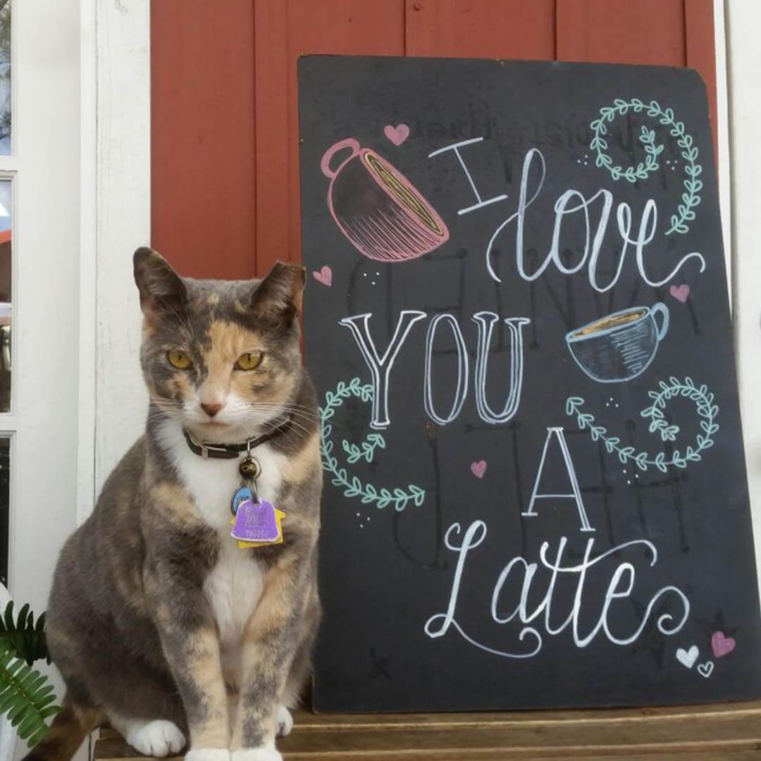 Photo of Photo of cat - 2