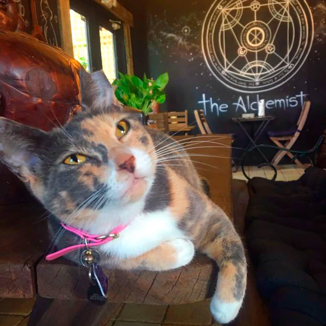 Photo of cat 5